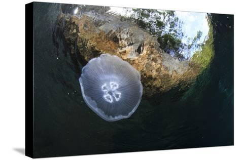Jellyfish below the Surface-Bernard Radvaner-Stretched Canvas Print