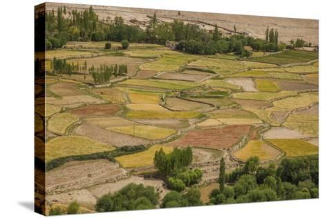 Chemde Monastery, near Karu, Corn Field around Monastery-Guido Cozzi-Stretched Canvas Print