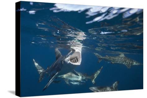 Blacktip Sharks (Carcharhinus Limbatus)-Reinhard Dirscherl-Stretched Canvas Print