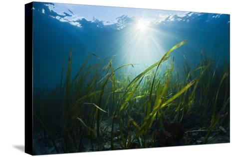 Seagrass-Reinhard Dirscherl-Stretched Canvas Print