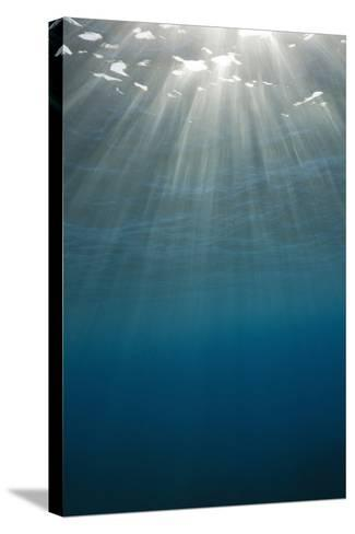 Sunbeams Filtering through the Ocean Surface-Reinhard Dirscherl-Stretched Canvas Print