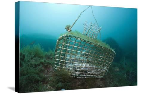 Fish Trap over a Coral Reef, Cap De Creus, Costa Brava, Spain-Reinhard Dirscherl-Stretched Canvas Print