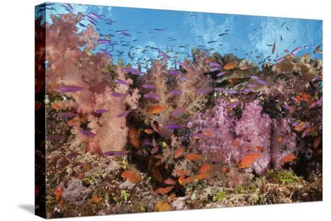 Colorful Fiji Coral Reef-Reinhard Dirscherl-Stretched Canvas Print