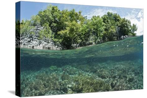 Shallow Coral Reef, Raja Ampat, West Papua, Indonesia-Reinhard Dirscherl-Stretched Canvas Print