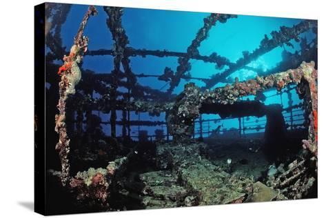 Scuba Diver Diving on Umbria Shipwreck, Sudan, Africa, Red Sea, Wingate Reef-Reinhard Dirscherl-Stretched Canvas Print