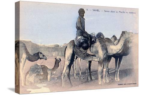 Serere, the Sahel, Senegal, 20th Century- Albaret-Stretched Canvas Print
