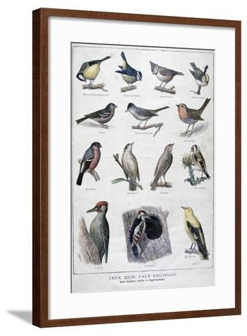 Useful Birds in Agriculture, 1896-A Clement-Framed Art Print