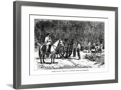 Harvesting the Coffee, Brazil, 19th Century-A de Neuville-Framed Art Print