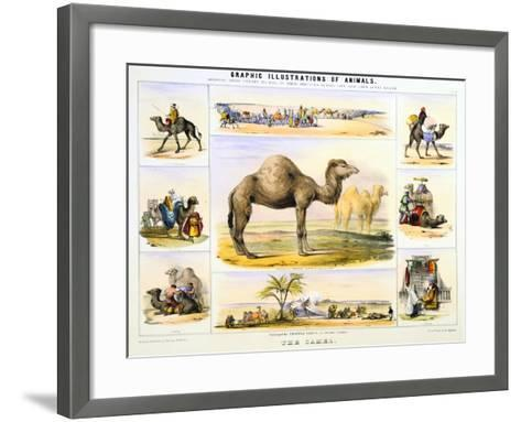 The Camel, C1850-Benjamin Waterhouse Hawkins-Framed Art Print