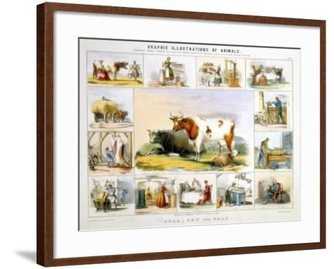 The Cow, C1850-Benjamin Waterhouse Hawkins-Framed Art Print