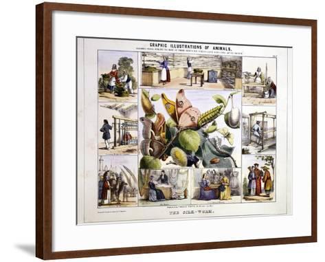 The Silk-Worm, C1850-Benjamin Waterhouse Hawkins-Framed Art Print