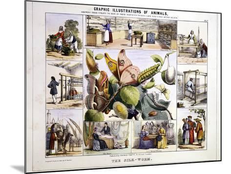 The Silk-Worm, C1850-Benjamin Waterhouse Hawkins-Mounted Giclee Print