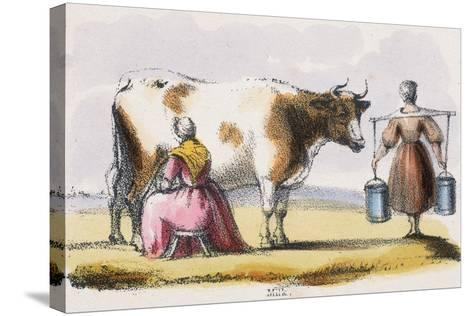 Milk, C1845-Benjamin Waterhouse Hawkins-Stretched Canvas Print