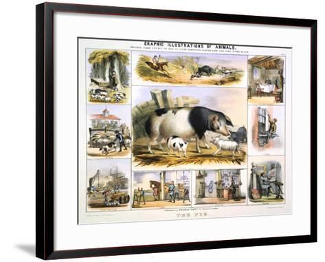 The Pig, C1850-Benjamin Waterhouse Hawkins-Framed Art Print