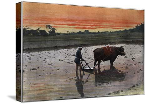 Preparation of a Rice Plantation in Japan, C1890-Charles Gillot-Stretched Canvas Print