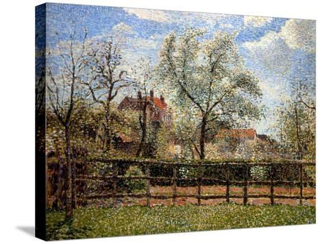 Pear Trees and Flowers at Eragny, Morning, 1886-Camille Pissarro-Stretched Canvas Print
