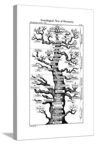 Haeckel's Scheme of Evolution Displayed in the Form of a Tree, 1910-Ernst Heinrich Philipp August Haeckel-Stretched Canvas Print