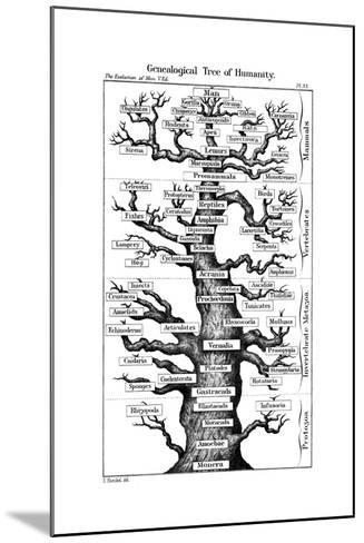 Haeckel's Scheme of Evolution Displayed in the Form of a Tree, 1910-Ernst Heinrich Philipp August Haeckel-Mounted Giclee Print