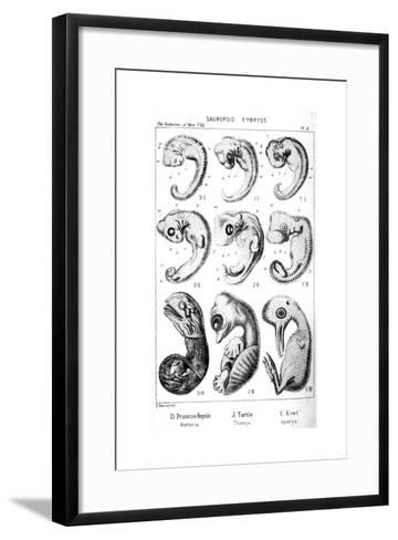 Sauropsid Embryos, 1910-Ernst Heinrich Philipp August Haeckel-Framed Art Print
