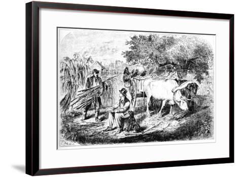 Oxen Hauling Corn, 19th Century-Edwin Forbes-Framed Art Print