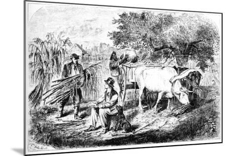 Oxen Hauling Corn, 19th Century-Edwin Forbes-Mounted Giclee Print