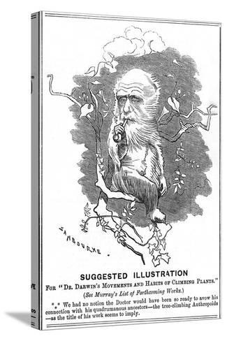 Charles Darwin, English Naturalist, 1875-Edward Linley Sambourne-Stretched Canvas Print