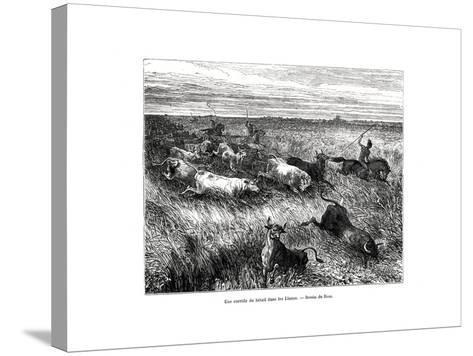 Livestock, Los Llanos, Venezuela, 19th Century-Edouard Riou-Stretched Canvas Print