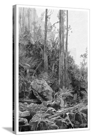 A Gully in the Blue Mountains, Australia, 1886-Frederic B Schell-Stretched Canvas Print