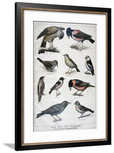 Birds That are Protected, and Helpful in Agriculture, 1897-F Meaulle-Framed Art Print