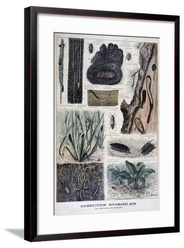 Insects Harmful to Furs, 1897-F Meaulle-Framed Art Print