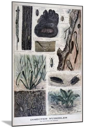 Insects Harmful to Furs, 1897-F Meaulle-Mounted Giclee Print