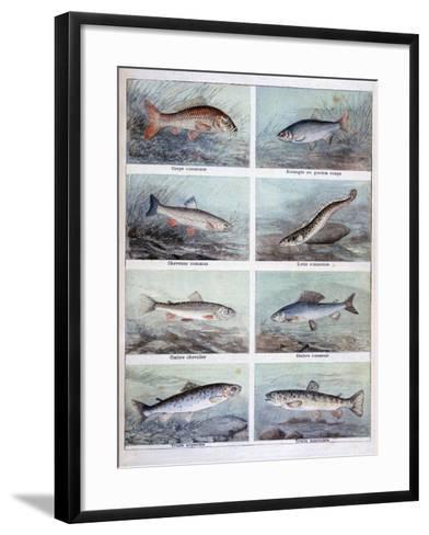 Freshwater Fish, 1898-F Meaulle-Framed Art Print
