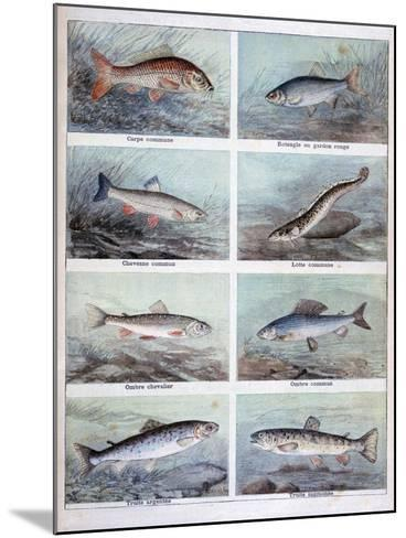 Freshwater Fish, 1898-F Meaulle-Mounted Giclee Print