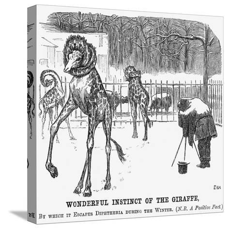Wonderful Instinct of the Giraffe, 1865-George Du Maurier-Stretched Canvas Print