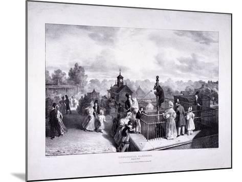 Zoological Gardens, Regent's Park, Marylebone, London, 1835-George Scharf-Mounted Giclee Print