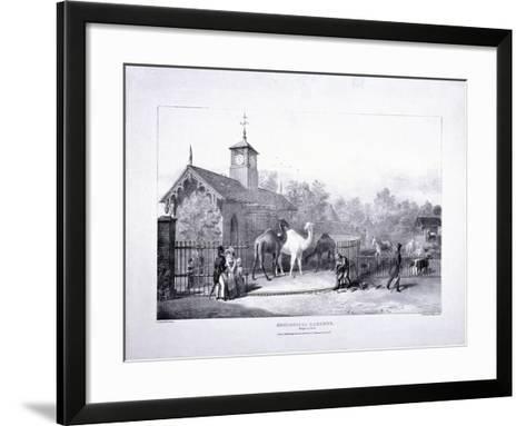 Zoological Gardens, Regent's Park, Marylebone, London, 1835-George Scharf-Framed Art Print