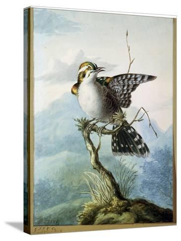 A Little Bird, 1798-Georgius Jacobus Johannes van Os-Stretched Canvas Print