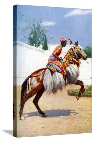 An Arab Dancing Horse, Udaipur, India, 1922-Herbert Ponting-Stretched Canvas Print