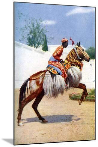 An Arab Dancing Horse, Udaipur, India, 1922-Herbert Ponting-Mounted Giclee Print
