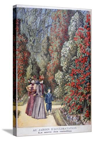 The Greenhouse of the Camellias, Zoological Gardens, Paris, 1897-Henri Meyer-Stretched Canvas Print