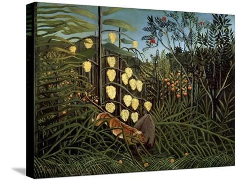 In a Tropical Forest. Struggle Between Tiger and Bull, 1908-1909-Henri Rousseau-Stretched Canvas Print