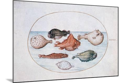 Fish, 16th Century-Joris Hoefnagel-Mounted Giclee Print
