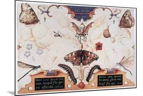 Diptych with Flowers and Insects, 1591-Joris Hoefnagel-Mounted Giclee Print