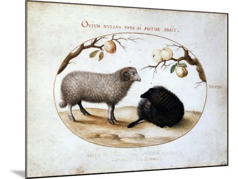 Ram, Black Sheep and Two Apple Branches, 16th Century-Joris Hoefnagel-Mounted Giclee Print