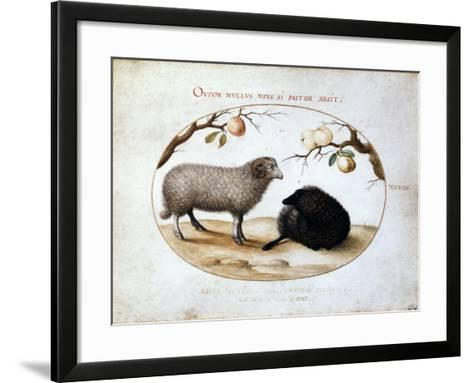 Ram, Black Sheep and Two Apple Branches, 16th Century-Joris Hoefnagel-Framed Art Print