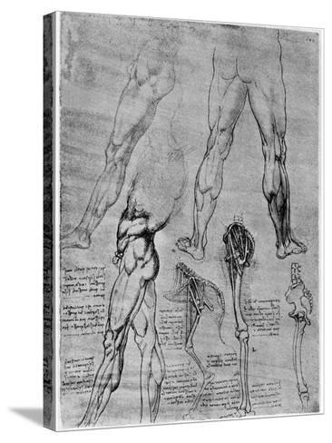Studies in Comparative Anatomy, 1506-1507-Leonardo da Vinci-Stretched Canvas Print