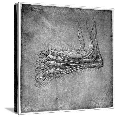 Muscles and Sinews in a Foot, Possibly of a Hare, Late 15th or Early 16th Century-Leonardo da Vinci-Stretched Canvas Print