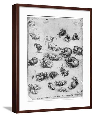 Studies of Cats, 1513-1515-Leonardo da Vinci-Framed Art Print
