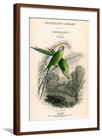 The Naturalist's Library, Ornithology Vol VIII, Red Ringed Parrakeet, C1833-1865-William Home Lizars-Framed Art Print