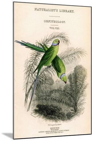 The Naturalist's Library, Ornithology Vol VIII, Red Ringed Parrakeet, C1833-1865-William Home Lizars-Mounted Giclee Print